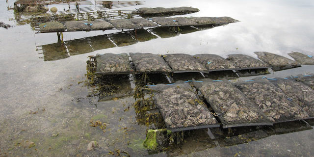 Aquaculture Gear Insurance