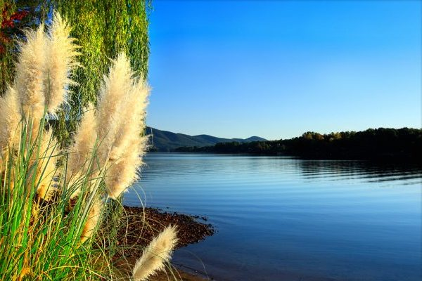 Lynchburg, VA Smith Mountain Lake calm blue lake water rimmed with trees, covered by cloudless blue sky, yellow tufted grasses in foreground.