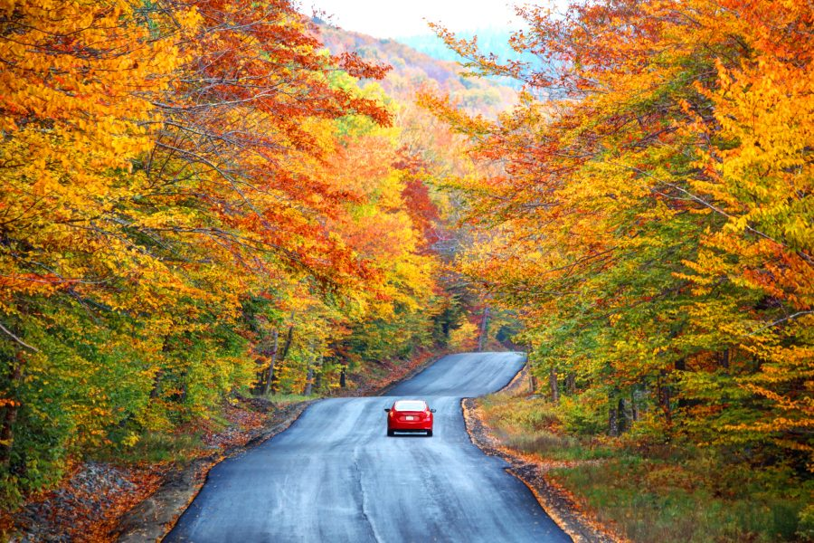 A car insurance client in a red vehicle on road flanked by autumn leaved trees in mountains.