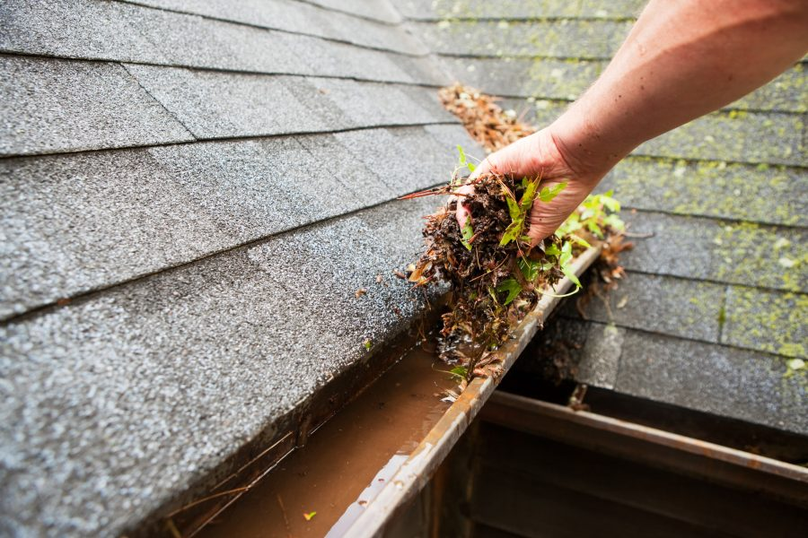 A homeowner trying to avoid a roof insurance claim by cleaning their gutters of leaves.