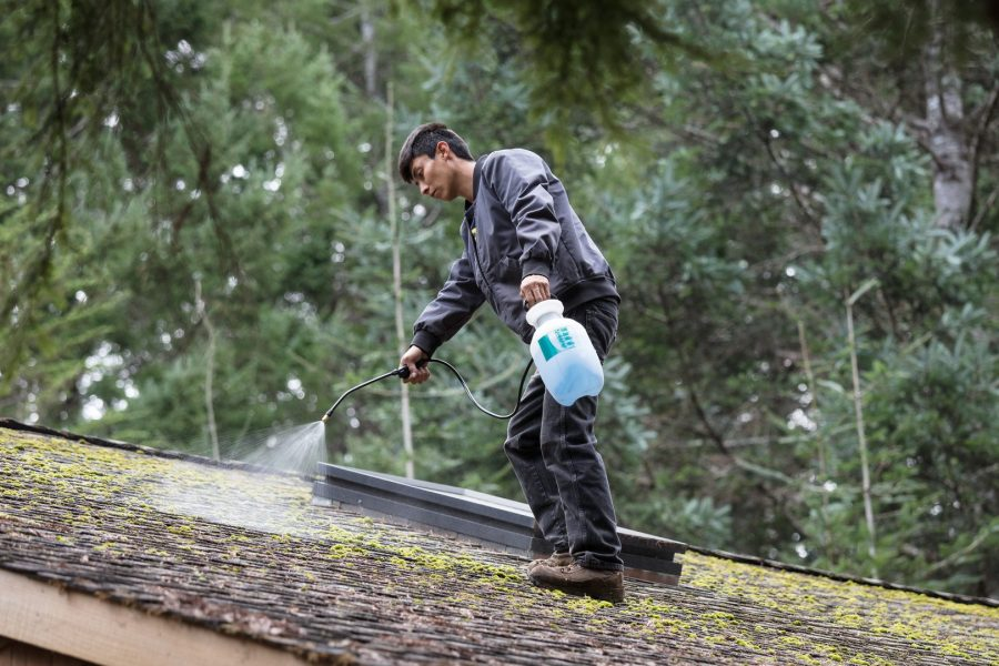 Man cleaning moss, lichen, or aglae from a roof to avoid a roof insurance claim.